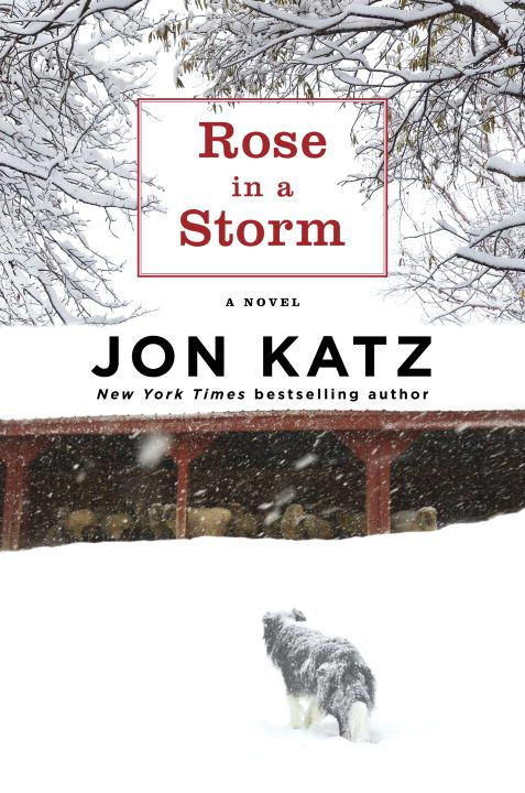 Rose in a Storm By: Jon Katz