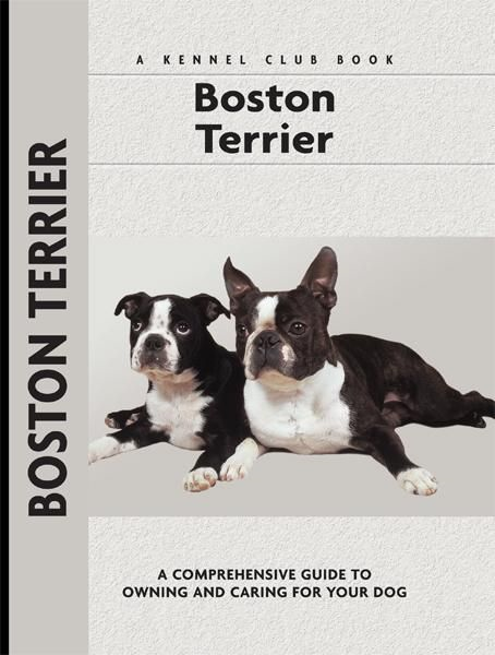 Boston Terrier By: Alma Bettencourt