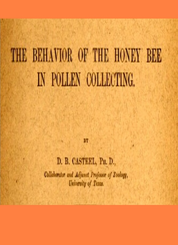 The Behavior of the Honey Bee in Pollen Collecting [Illustrated]