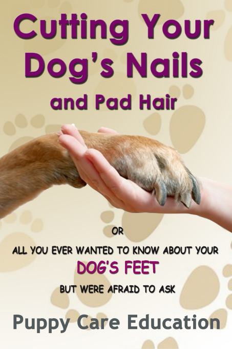 Cutting your Dogs Nails and Pad Hair By: Puppy Care Education