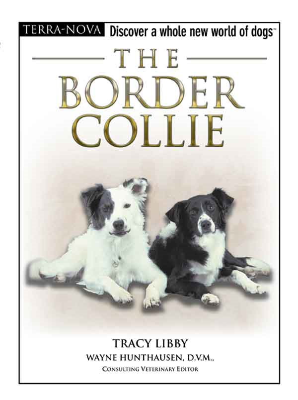 The Border Collie By: Tracy Libby