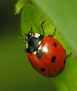 A Crash Course on How to Get Rid of Lady Bugs By: Steve Reeves