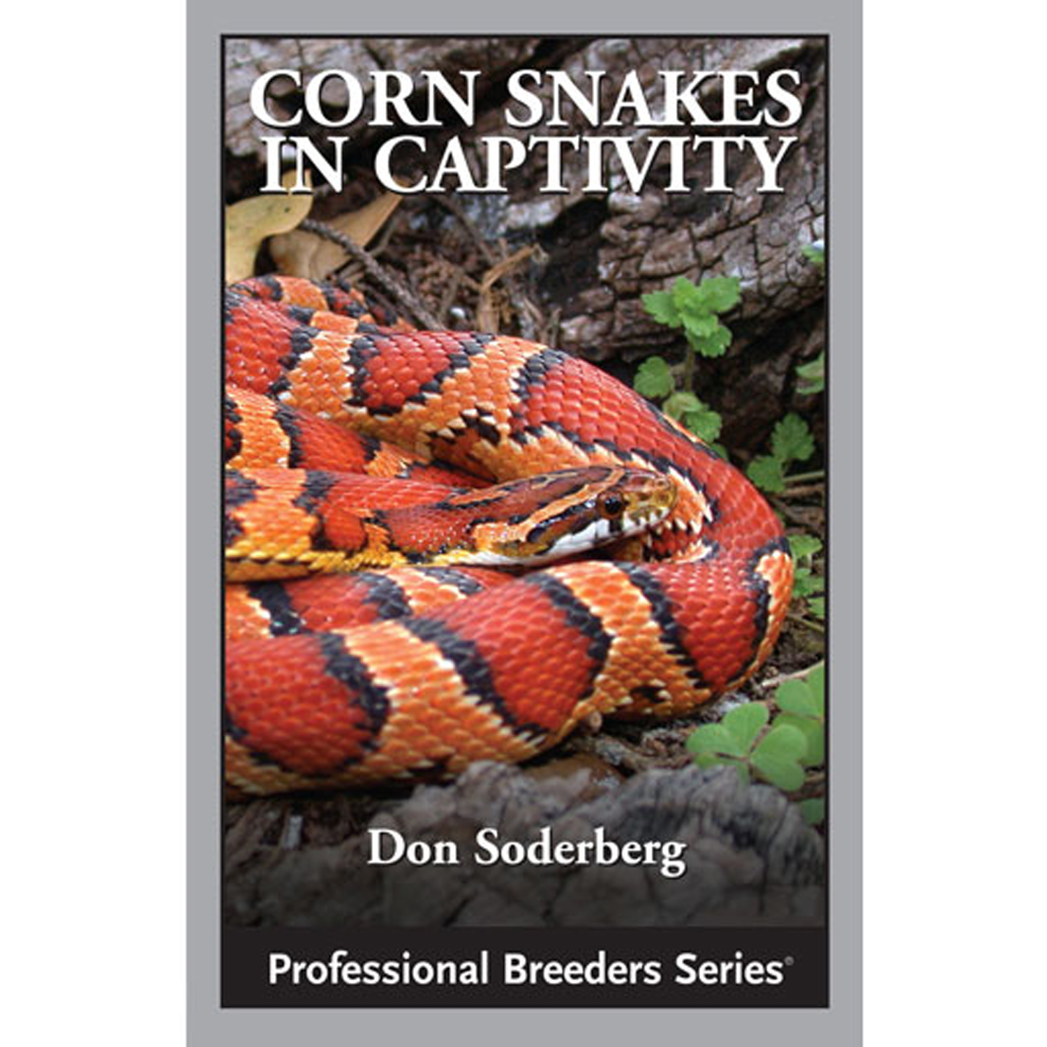 Corn Snakes in Captivity