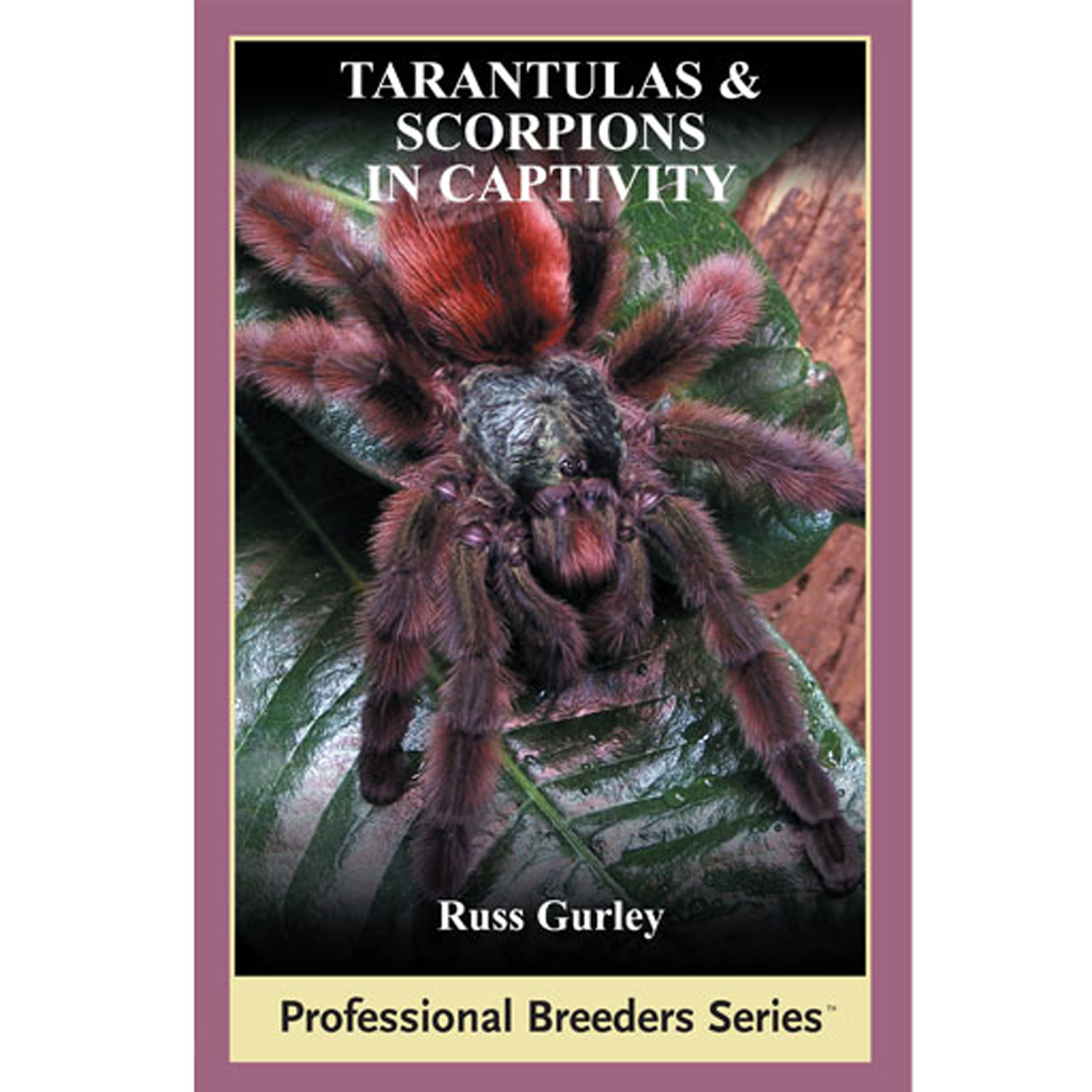 Tarantulas and Scorpions in Captivity