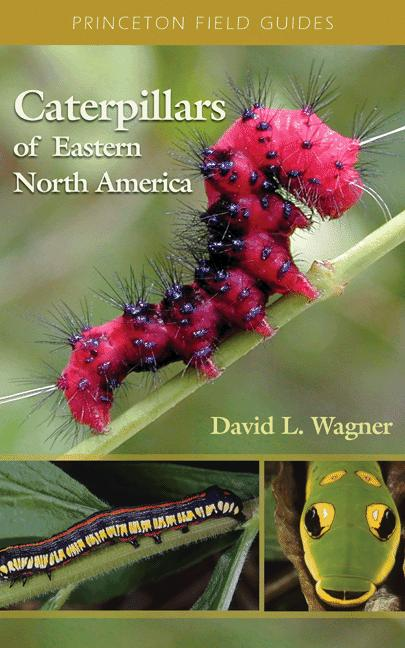 Caterpillars of Eastern North America By: David L. Wagner