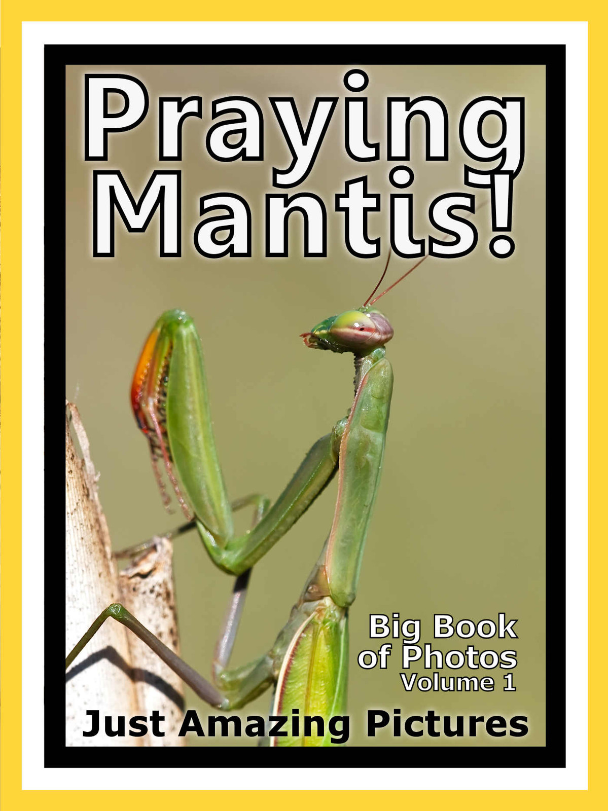 Just Praying Mantis Photos! Big Book of Photographs & Pictures of Praying Mantis, Vol. 1