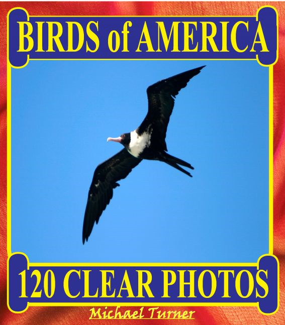 Birds of America. 120 Clear Photos.