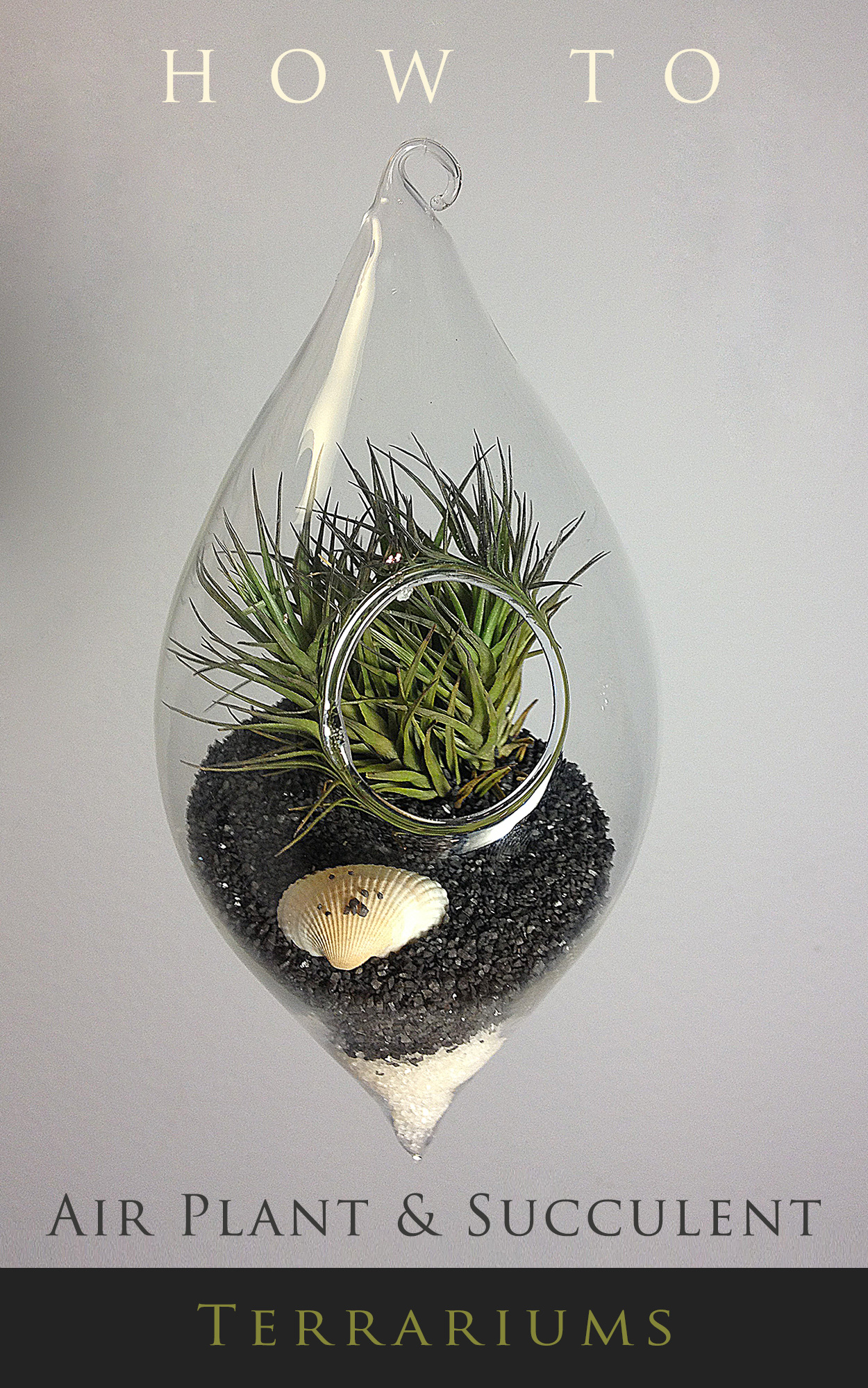 How To... Air Plant And Succulent Terrarium