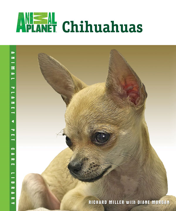 Chihuahuas By: Richard Miller