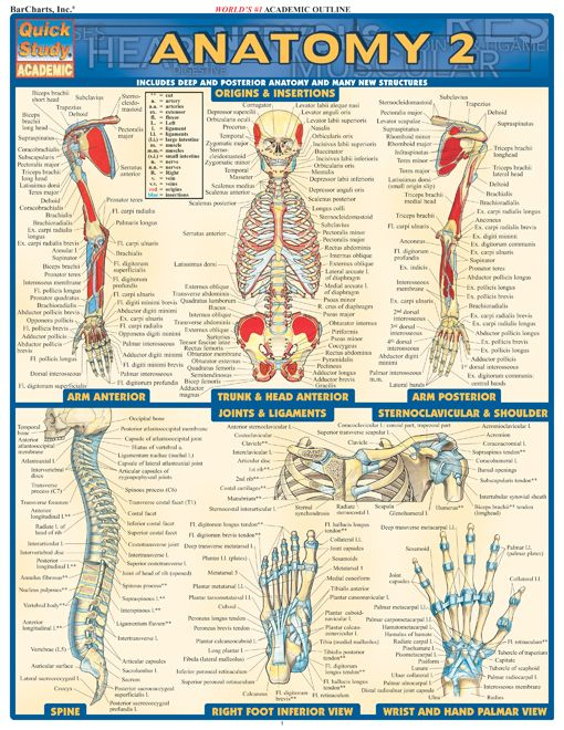 Anatomy 2 By: BarCharts,Inc