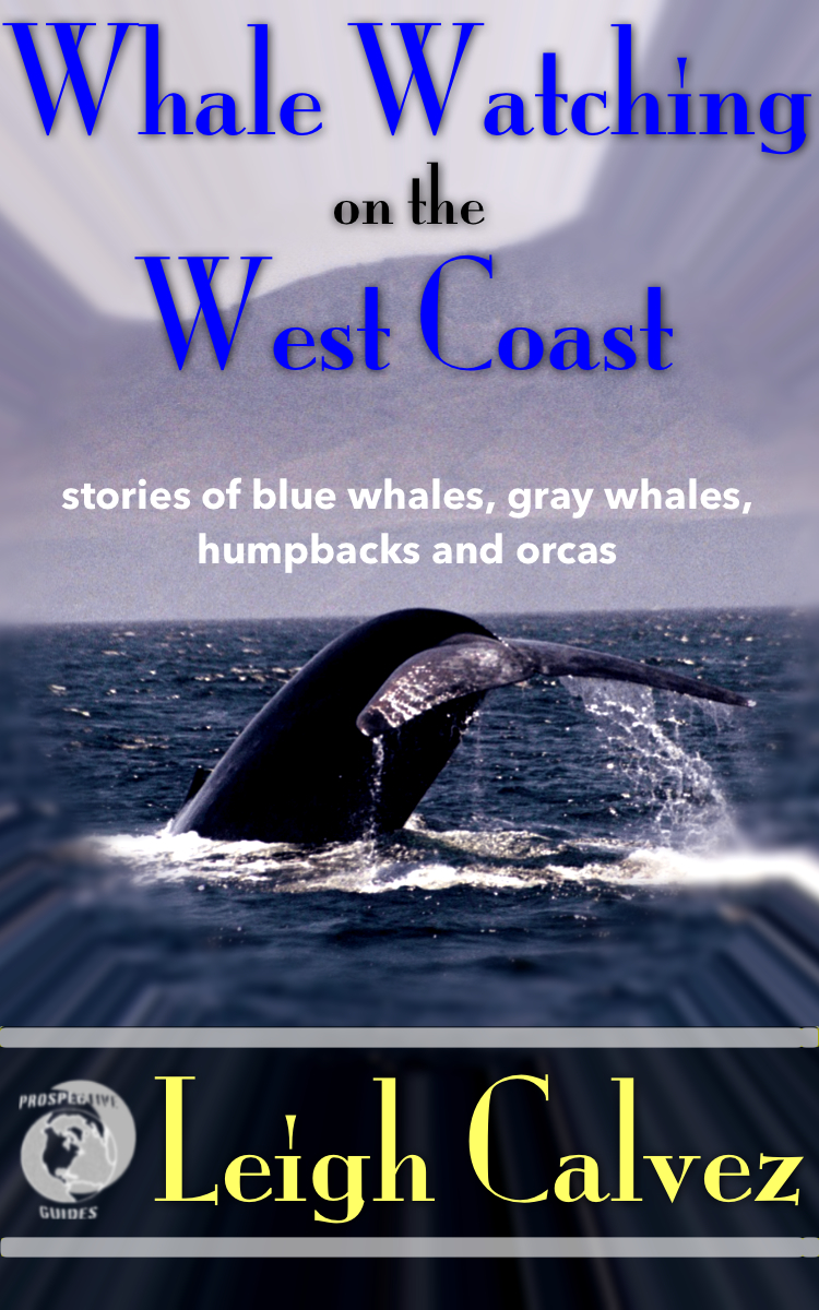 Whale Watching on the West Coast