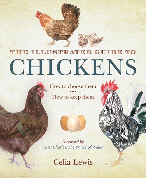 The Illustrated Guide to Chickens