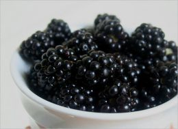 A Crash Course on How to Grow Blackberries By: Linda Cooper