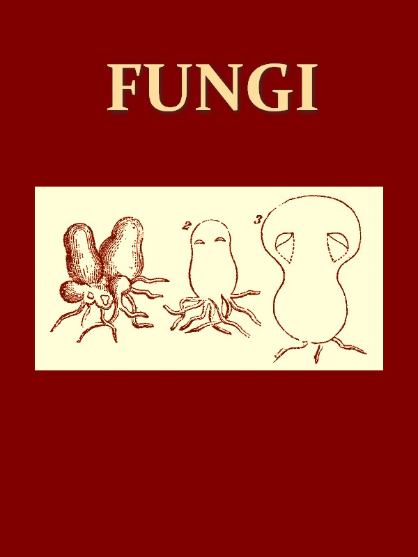 Fungi [Illustrated]