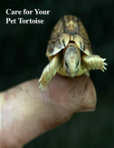 Care For Your Pet Tortoise