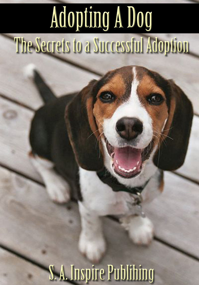 Adopting A Dog : The Secrets to a Successful Adoption!