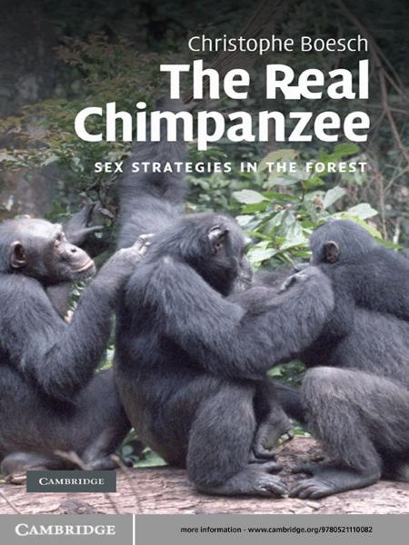 The Real Chimpanzee Sex Strategies in the Forest
