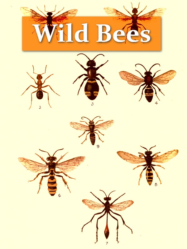 Wild Bees, Wasps and Ants and Other Stinging Insects [Illustrated]