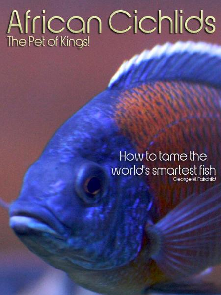 African Cichlids The Pet of Kings!: How to tame the world's smartest fish.