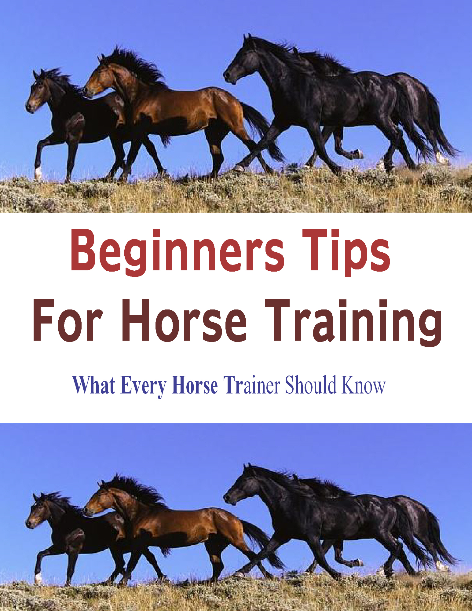 Beginners Tips for Horse Training