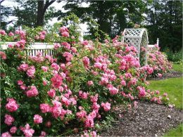Rose Gardening Companion: A Starter's Guide To Rose Gardening