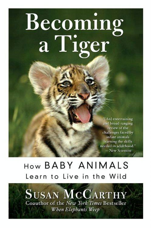 Becoming a Tiger By: Susan McCarthy