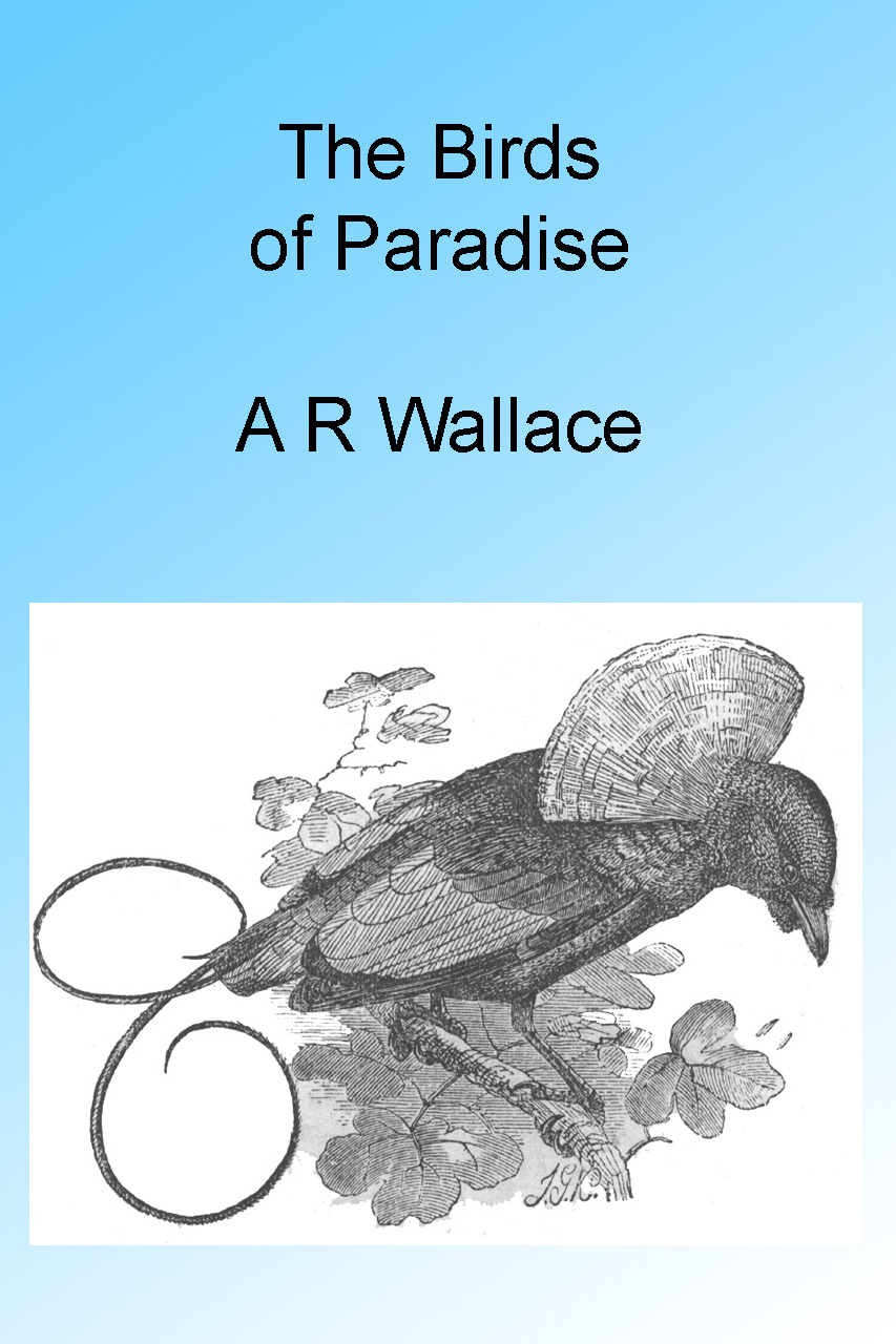 The Birds of Paradise, Illustrated