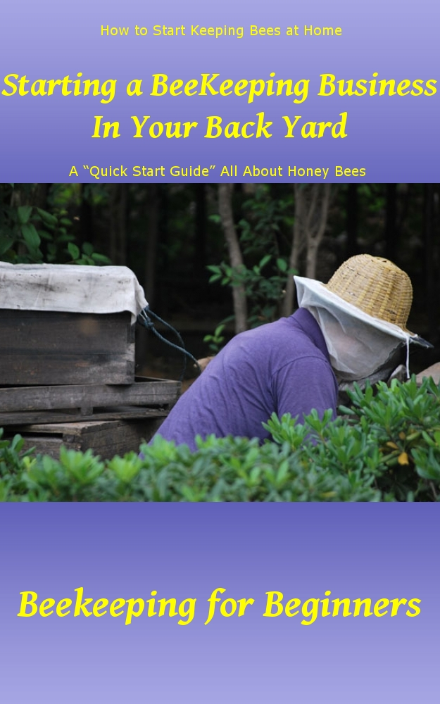 Starting a Beekeeping Business in Your Back Yard