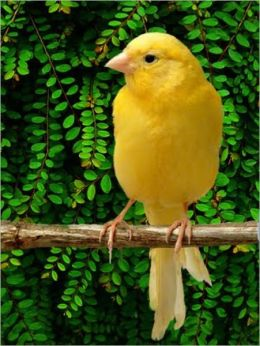 A Beginners Guide to Canary Care