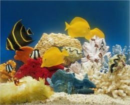Saltwater Aquariums For Beginners