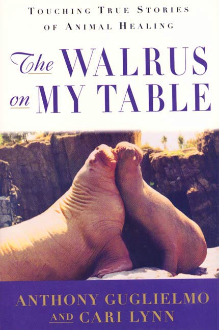 The Walrus on My Table