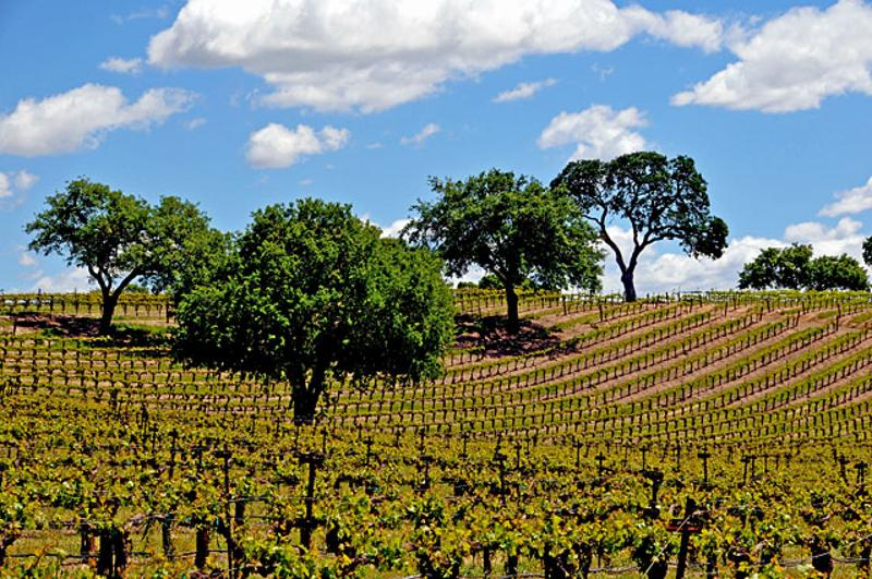 California Wine Country - The Napa Valley