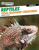 Reptiles: Cold-Blooded Creatures