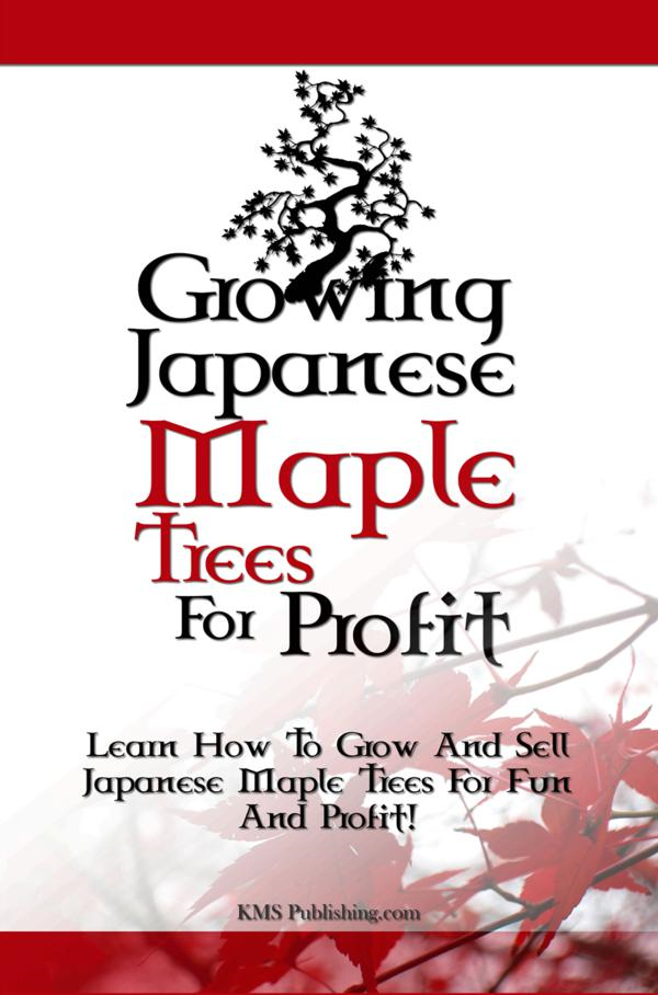 Growing Japanese Maple Trees For Profit