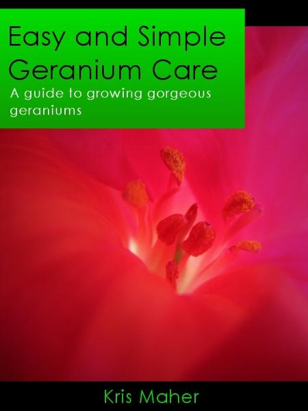 Easy and Simple Geranium Care: A Guide to Growing Gorgeous Geraniums