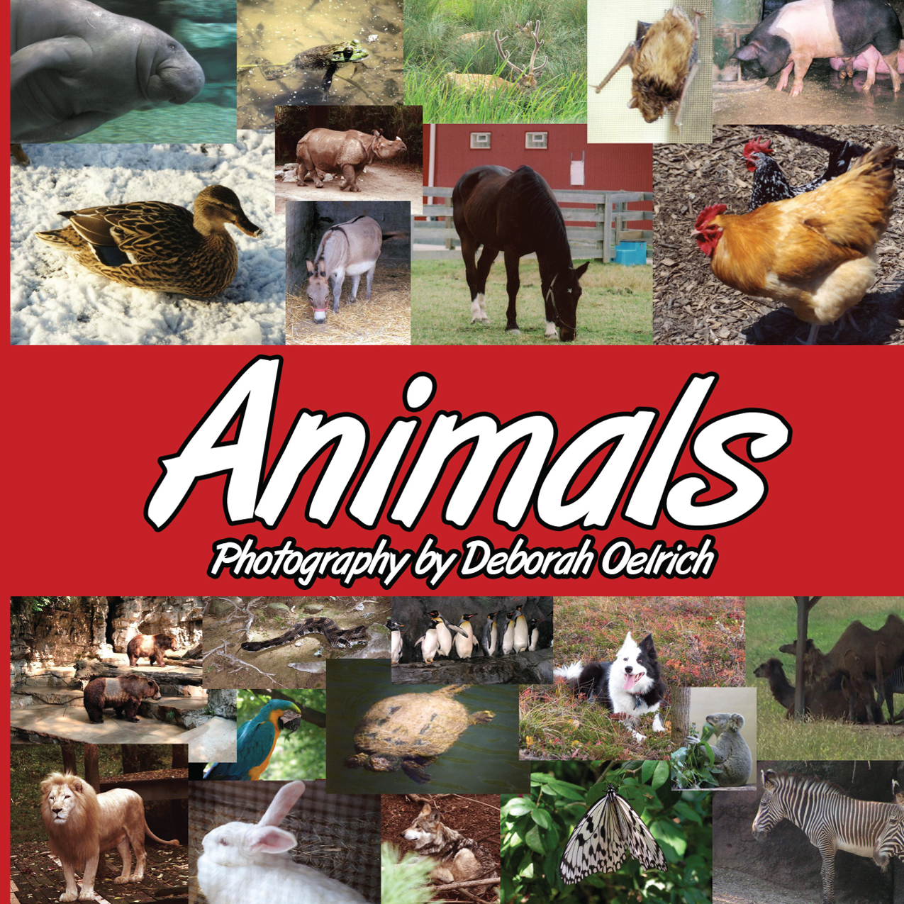 Animals By: Deborah Oelrich