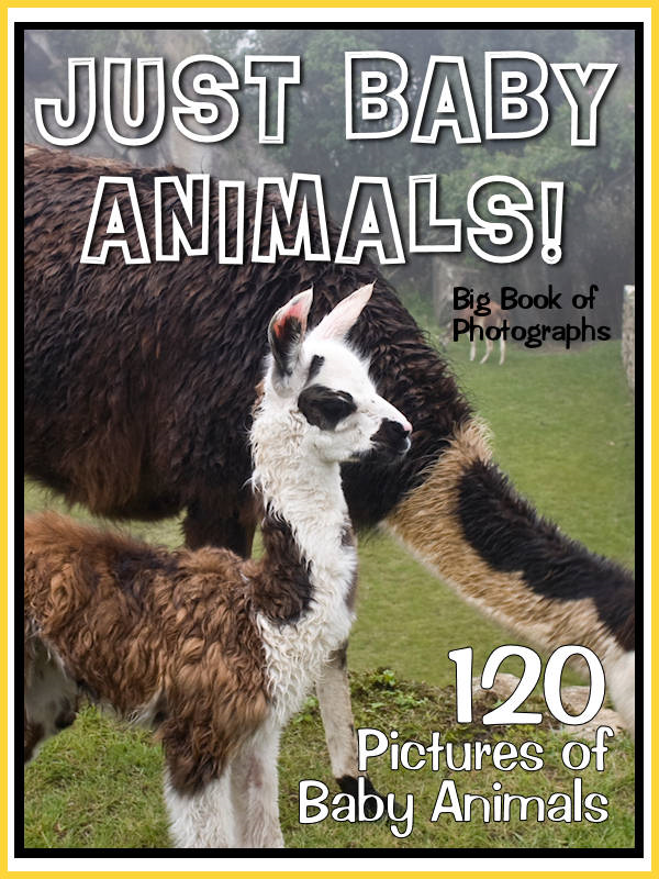 120 Pictures: Just Baby Animals!