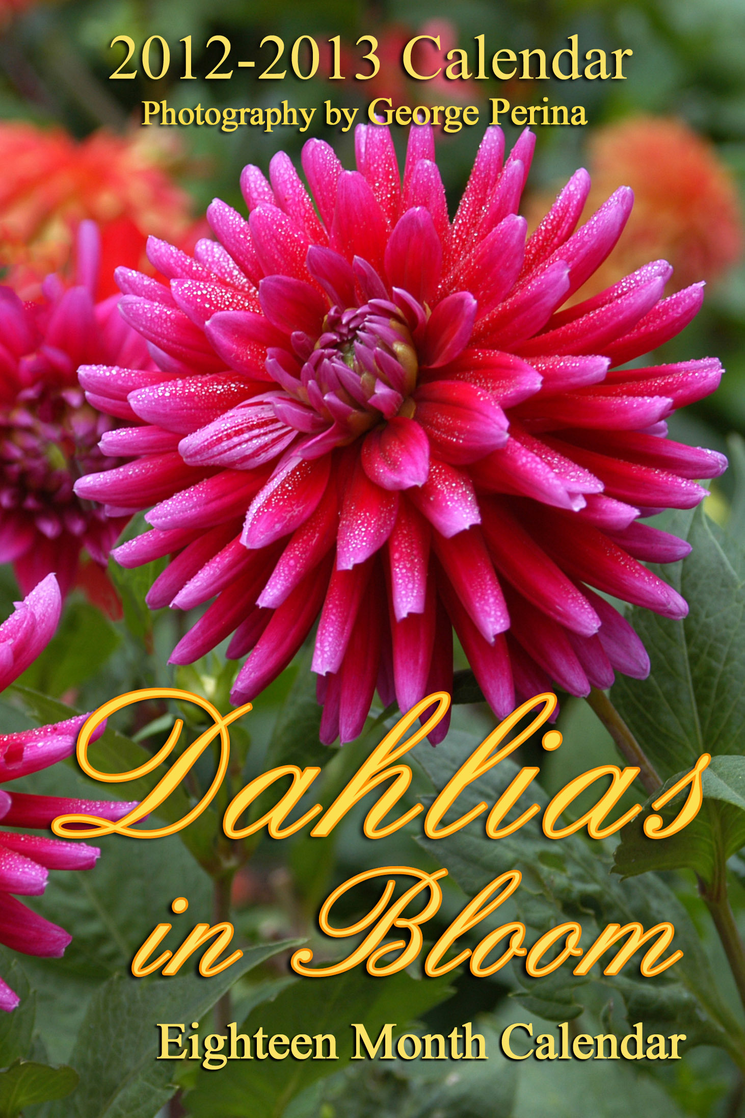 Dahlias In Bloom