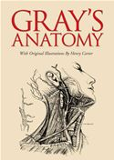 Picture of - Gray's Anatomy