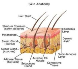 An Informative Guide About Basal Cell Carcinoma