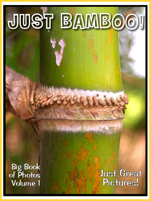Just Bamboo Photos! Big Book of Photographs & Pictures of Bamboo, Vol. 1