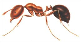 A Crash Course on How to Get Rid of Fire Ants
