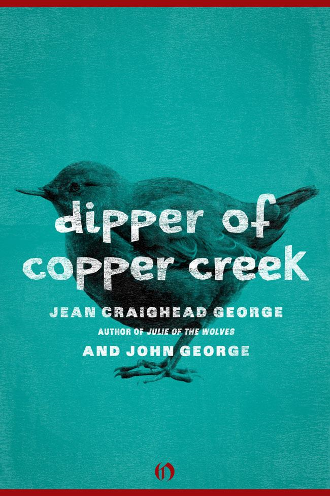 Dipper of Copper Creek