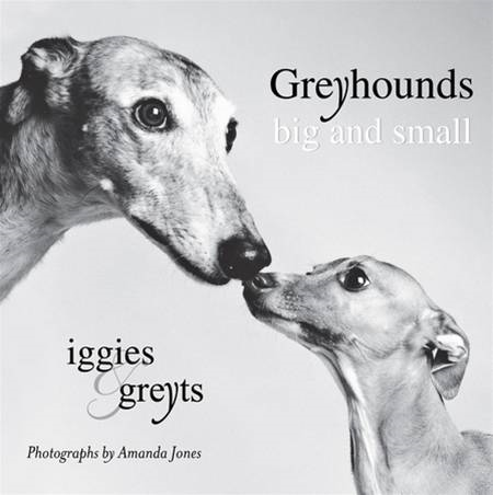 Greyhounds Big and Small: Iggies and Greyts