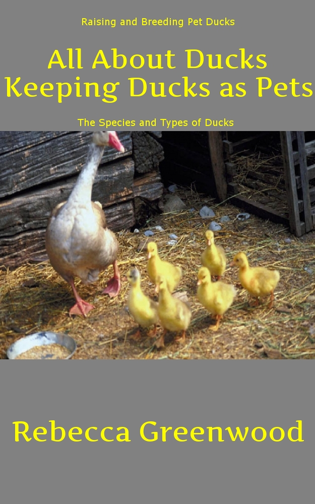 All About Ducks: Keeping Ducks as Pets By: Rebecca Greenwood