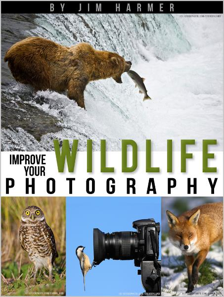 Improve Your Wildlife Photography By: Jim Harmer