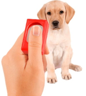 A Beginners Guide to Clicker Training By: Tom Paunovic