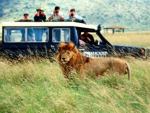 African Safari Vacations for Beginners By: Adam Sol