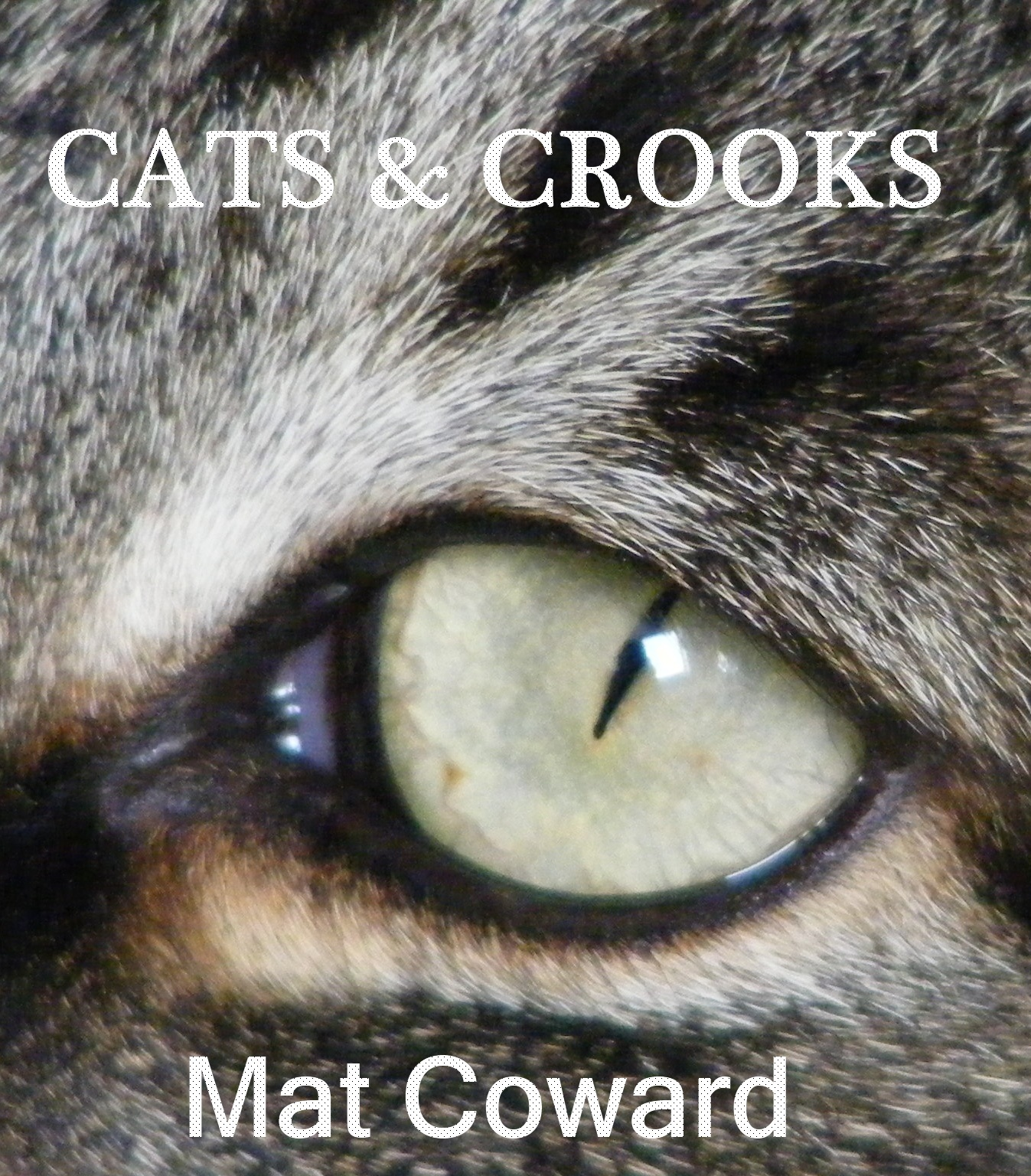 Cats & Crooks