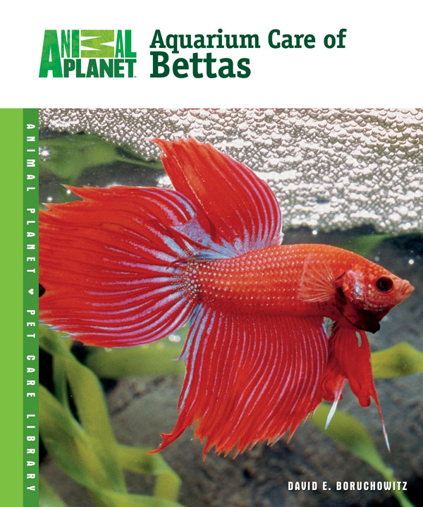 Aquarium Care of Bettas